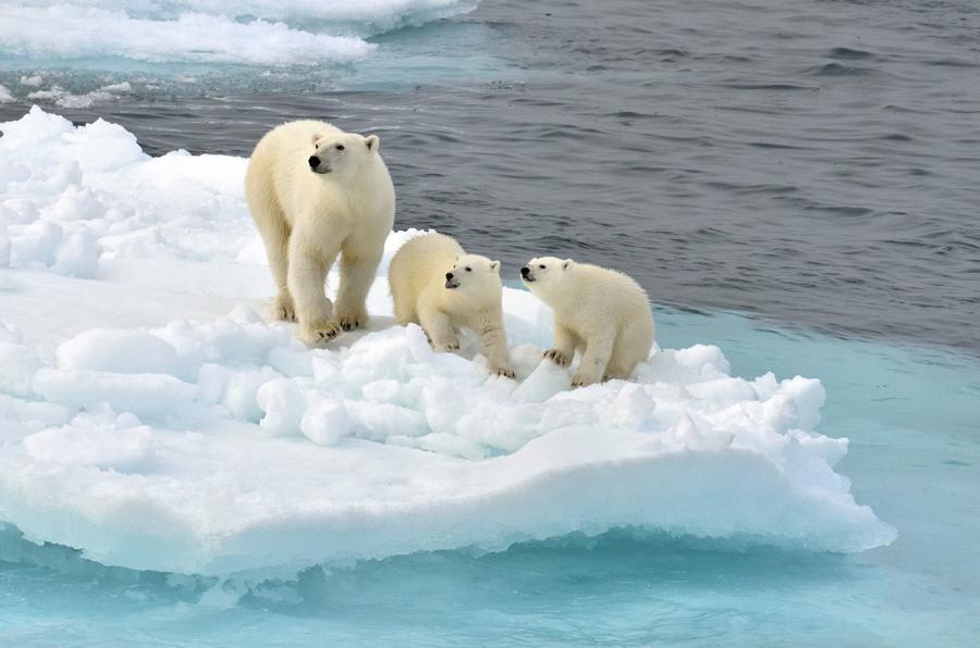 Polar bear protection forum Moscow, 4-6 December 2013 ...